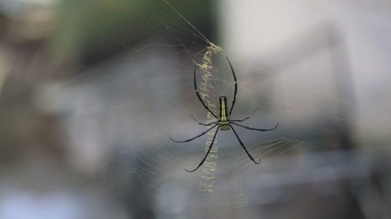 Jak pozbyć się pająków z domu