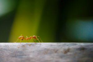 Jak pozbyć się mrówek z domu