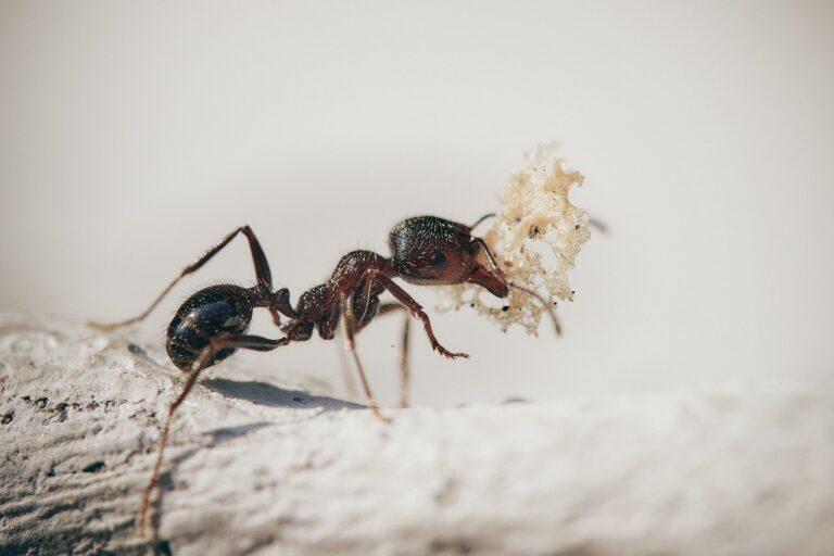 środek na owady pełzające