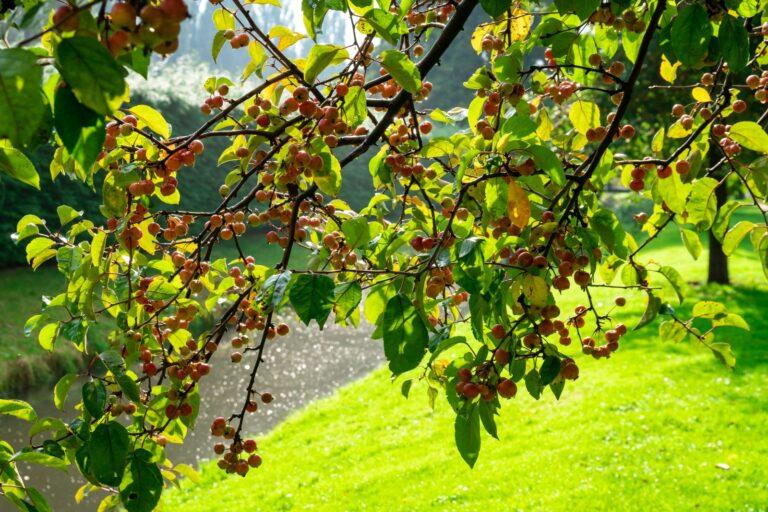 Jak chronić drzewa owocowe