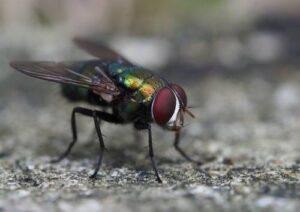 jak zwalczyc muchy